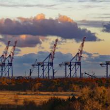 Żurawie na terenie portu DCT
