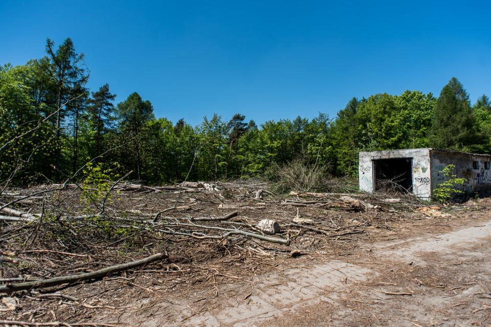 Wycinka drzew na terenie byłej jednostki wojskowej na końcu ulicy Bronisława Dembińskiego