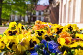 Wiosna w Ogrodach Doraco
