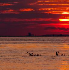 Ptaki skąpane w zachodzącym słońcu