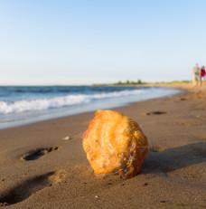 Przyjdź i zobacz skarby Wyspy Sobieszewskiej