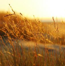 Złote Sobieszewo