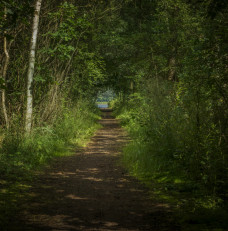 Roślinny tunel