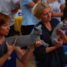 Międzynarodowa Wystawa Kotów Rasowych Sopot 2017