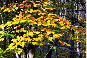 trójmiejskie lasy jesienią