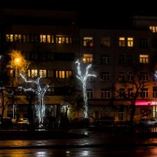 Drzewa przy Skwerze Kościuszki