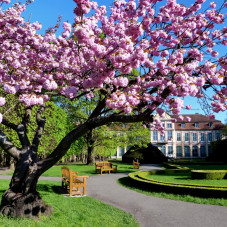 Wiosna w Parku Oliwskim