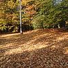 W żółtych płomieniach liści