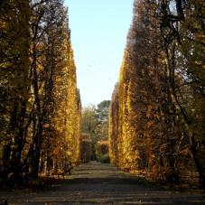 Park Oliski