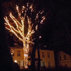Iluminacje w Parku Oliwskim