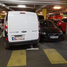 Pozdrowienia dla łosia za kierownicą Renault :)