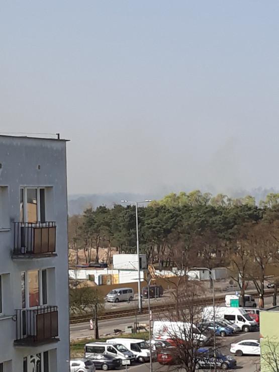 Pożar w lasku w Brzeźnie