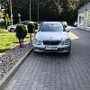 Łoś drogowy na parkingu na Matarni