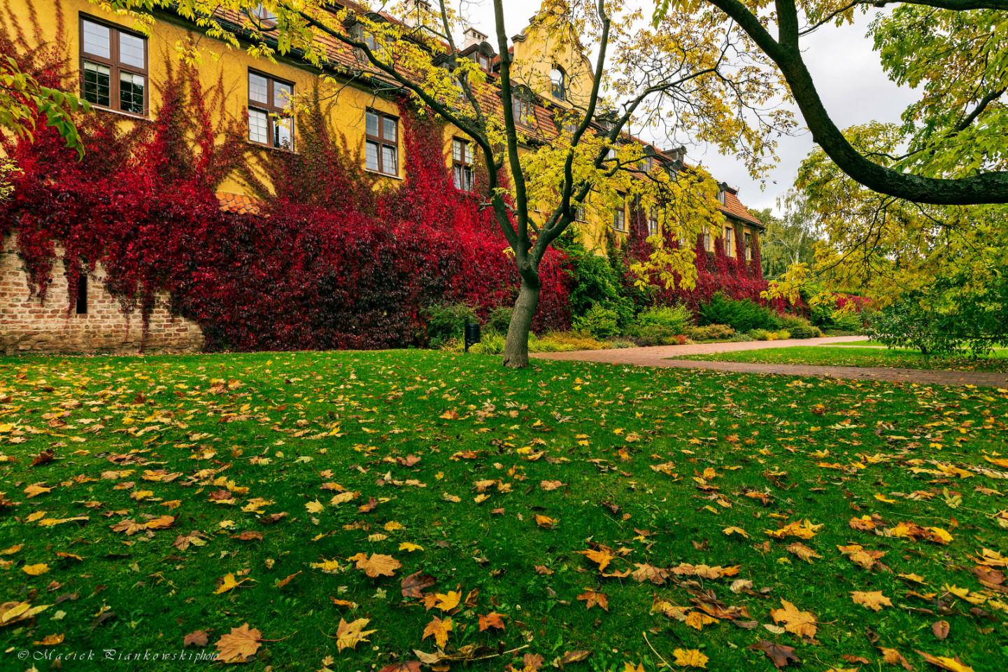 jesień w Parku Oliwskim