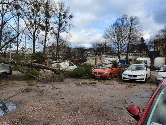 Drzewo spadło na zaparkowane auto