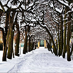 Zima w Parku Oliwskim