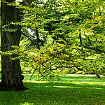 Park w Oliwie - w cieniu liści