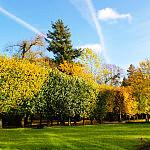Jesień w Oliwskim Parku