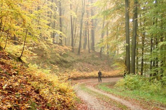 To już ostatni moment na wędrówkę po lasach liściastych, za chwilę pryśnie czar pięknej jesieni. Wybierz się z nami, poznaj ciekawe miejsca i pozytywnie zakręcone towarzystwo.