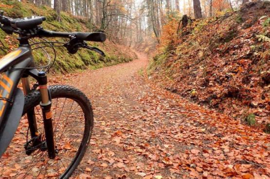 To już ostatni moment na wypad rowerowy po lasach liściastych, za chwilę pryśnie czar pięknej jesieni. Wybierz się z nami, poznaj ciekawe miejsca i pozytywnie zakręcone towarzystwo.