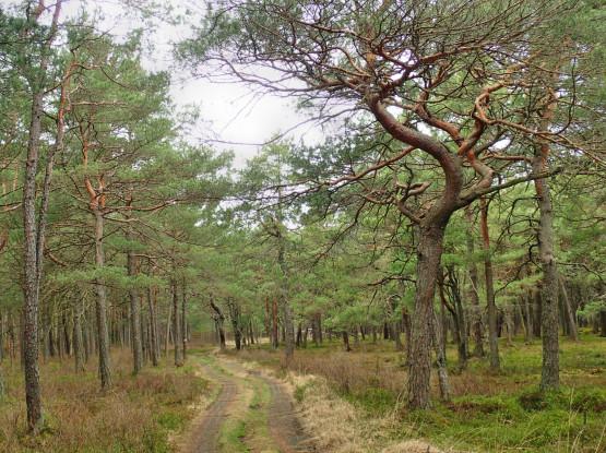 Lasy Puszczy Darżlubskiej są zróżnicowane: mnóstwo tu buków i dębów, a także wiecznie zielonych iglaków. Chcąc naładować nasze baterie pięknymi barwami, wybierzemy się tam, gdzie dominuje zieleń.