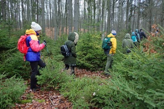 Lasy Mirachowskie, które odwiedzimy, zwane są zielonymi płucami Kaszub