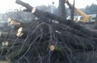 PKP wycina drzewa na Oruni Dolnej