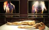 Zobacz wnętrze ludzkiego ciała