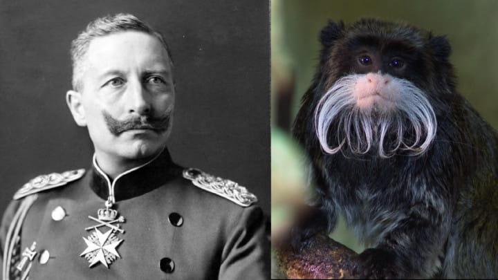 Zobacz, co łączy tamarynę icesarza Niemiec oraz przekonaj się, jak małpy mieszkają razem zwłochatymi pancernikami.