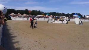 Hipodrom Sopot najmniejszy koń w Polsce