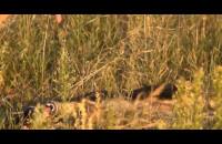 Twoja Psia Niania - Najbardziej przyjazny hotel dla psów w Trójmieście