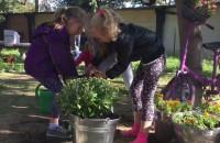 Otwarcie ogrodu w mrowisku na Dolnym Mieście