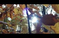 Złota jesień w trójmiejskich lasach
