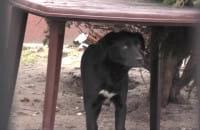 Psy odpowiedzialne za ataki na mieszkańców Krakowca