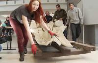 Ogromny szkielet wieloryba trafił na Uniwersytet Gdański