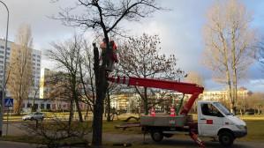 Wycinka drzew w centrum Gdyni