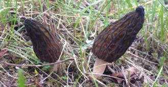 Rzadkie grzyby wyrosły przy szkole