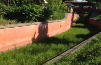 Kanał Raduni jak trawnik