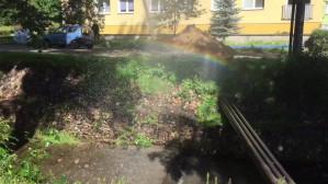 Tęcza w Parku Oliwskim