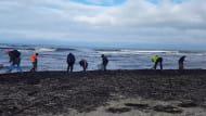 Poszukiwacze bursztynów na plaży