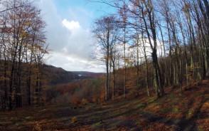 Zakamarki Lasów Mirachowskich