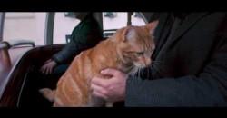 Kot Bob i ja- zwiastun