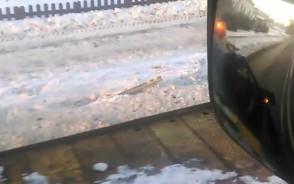 Laweta ściąga auto po kolizji