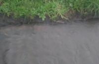 Deszcz niewielki, a studzienki już wybijają