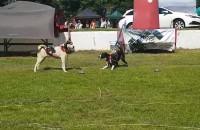 Wystawa psów rasowych na hipodromie