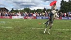 Paco Lobo z Hiszpanii i jego latające psy