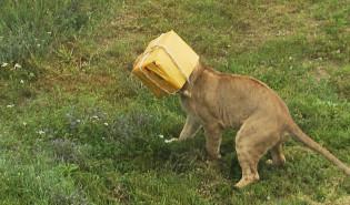Mateusz Mika odwiedził stado gdańskich lwów