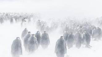 Marsz pingwinów 2: Przygoda na krańcu świata - zwiastun