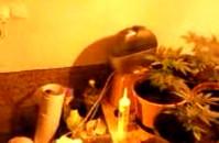 Uprawa marihuany w gdyńskim mieszkaniu.