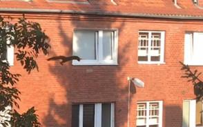 Latająca wiewiórka
